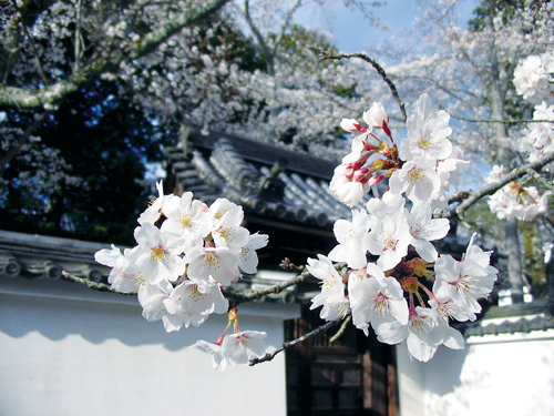 cc-japon-nanzenji.jpg