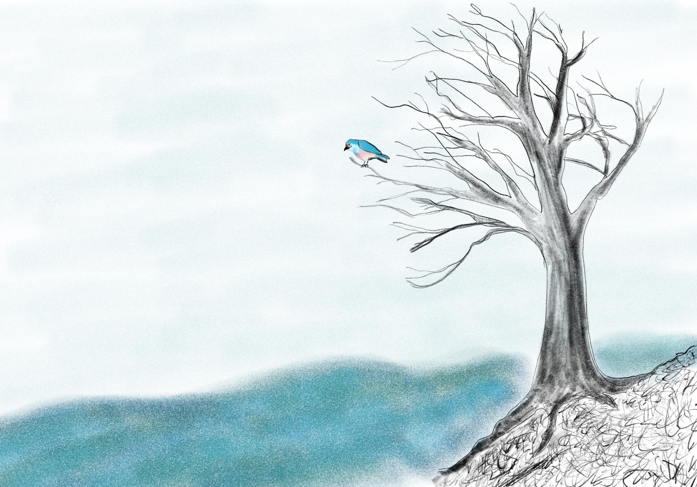 Les oiseaux de la rivière Aras